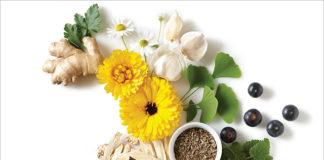 plante medicinale vindecatoare