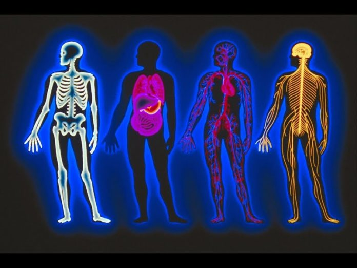 corpul uman