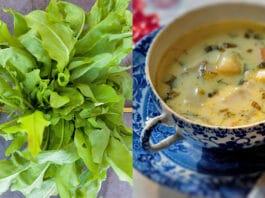 Măcriș verde și supă de măcriș